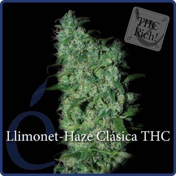 Llimonet Haze Clasica THC (x3) Fem - Elite Seeds - 1