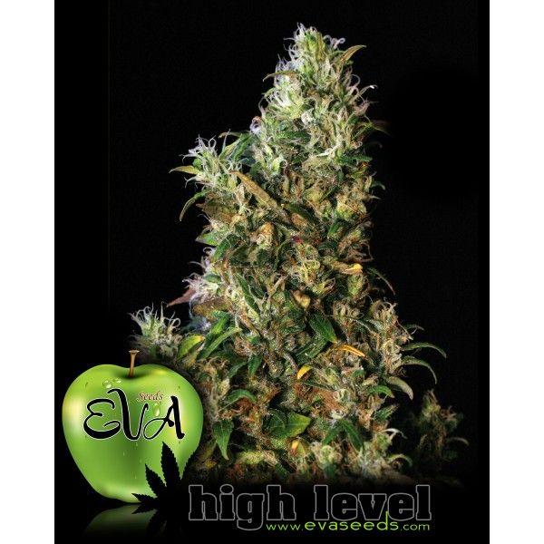 High Level (x3+1) Fem - Eva Seeds - 1