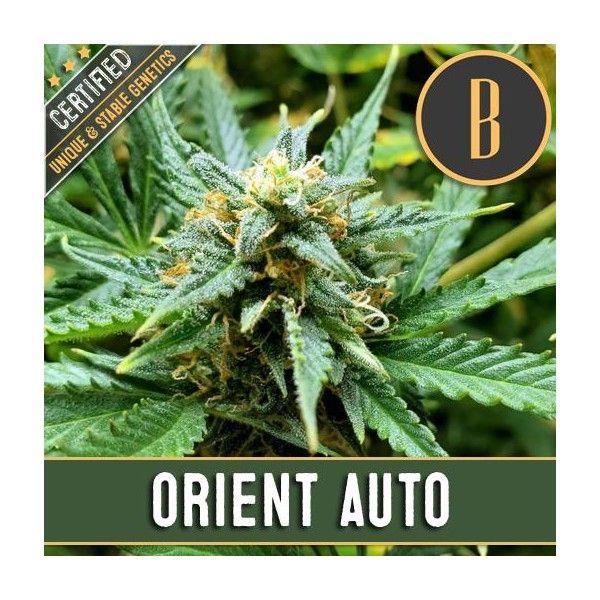 Orient Auto (x3) - Blimburn - 1