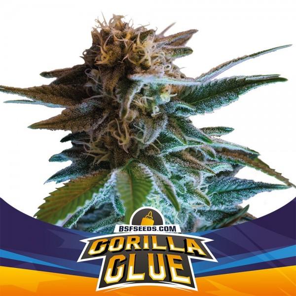 Gorilla Glue Auto (x7) - BSF - 1