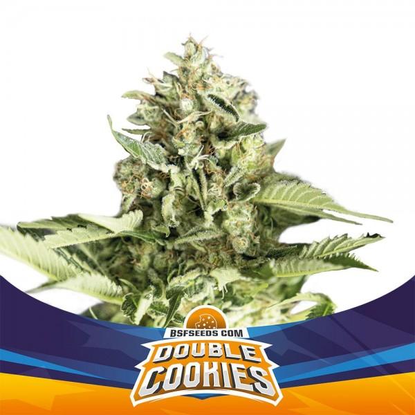 Double Cookies Auto (x4) - BSF - 1