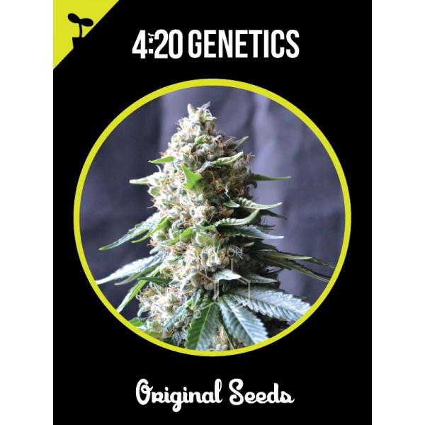 Power Plant (x3) - 420 Genetics - 1