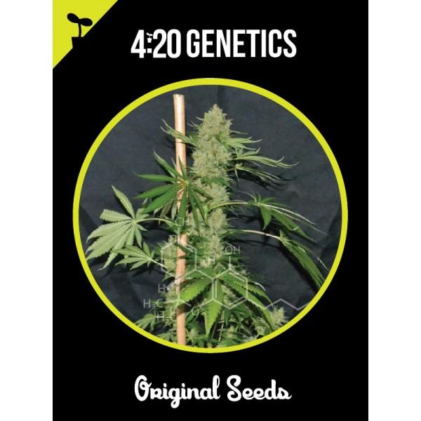 White Widow (x3) - 420 Genetics - 1
